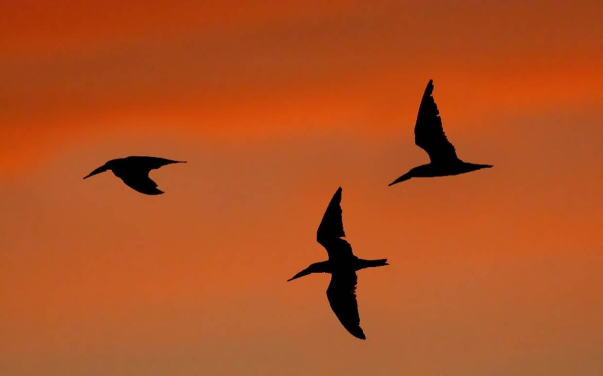 A bird flying in the air with a sunset in the background